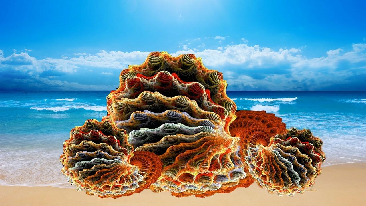 sea-shells-284559_1280